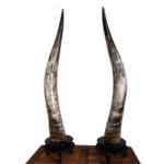 Mô hình giá Horn Top – Horn Bottom trong Forex