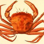 Mô hình harmonic số 4: Mô hình con cua ( Crab )