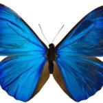 Mô hình harmonic số 2: Mô hình cánh bướm ( Butterfly )